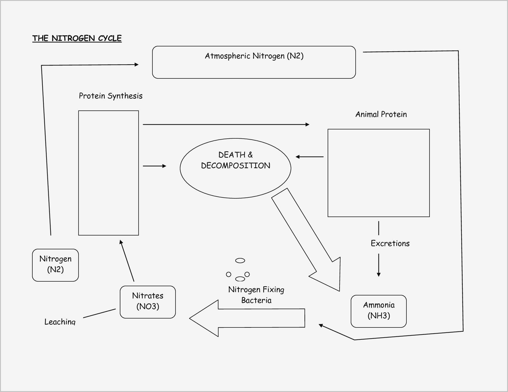 30 Nitrogen Cycle Worksheet Answer Key
