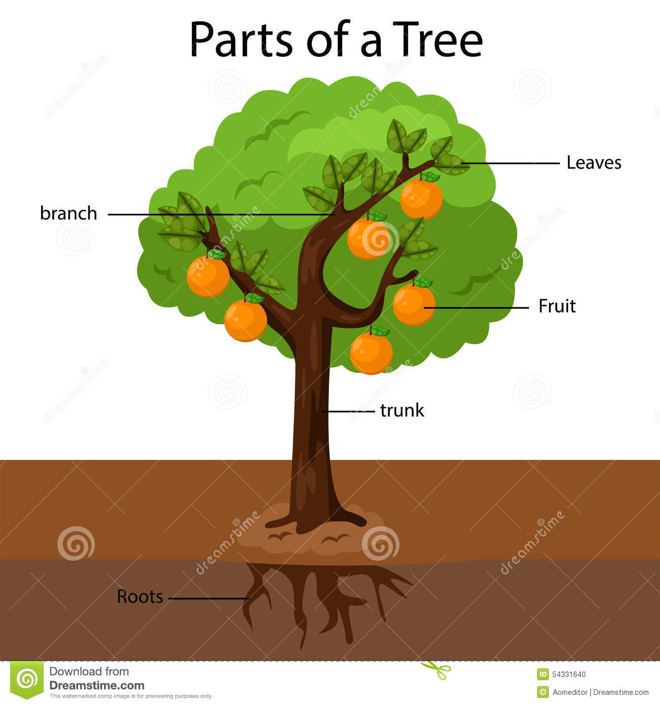Parts Of A Tree Worksheet Education Template