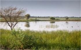 Dasada Wetlands