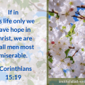 Illustration -In this life only - background - blossom tree - text - Bible verse - 1 Corinthians 15 verse 19