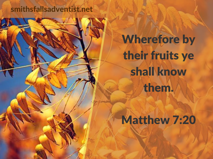 Illustration-background-tree-title-Fruits of righteousness-text-Bible verse