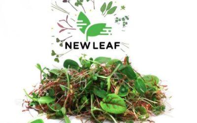NEW LEAF MICROGREENS