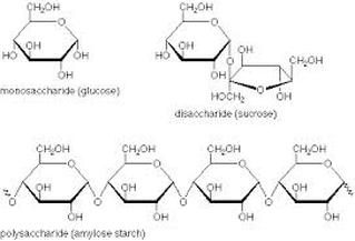 Macromolecules of Life - Mr. Smit: Life Sciences For SHS