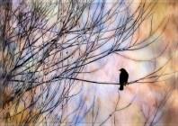 Cosumnes_silhouette_2