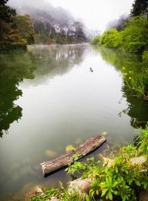 Fog Morning, Stow Lake