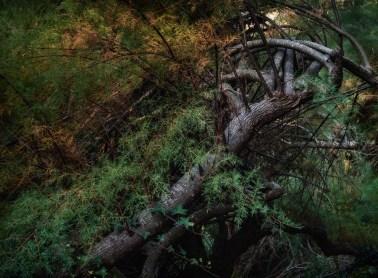 Dusk scene, Mallard Lake