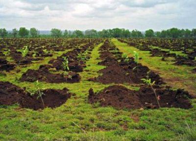Campanie de plantare de puieti in judetul Satu Mare