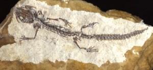 6 Foto Salamander (Foto Rasser)