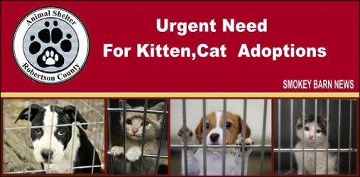 RC Animal Control urgent adoptions needed