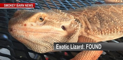 exotic lizrd found