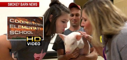 Tight Budgets Spark Pig Kissing At Coopertown Elementary