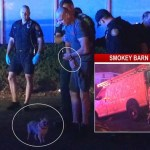 Two Arrested After Lighting Their Van On Fire And Attacking An Officer