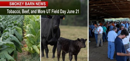 The Annual Tobacco, Beef, and More UT Field Day Set For June 21
