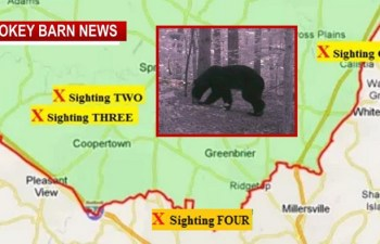 Bear Sighting # 4: Recent Trail Cam Captures Best Image So Far