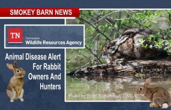 Animal Disease Alert For Rabbit Owners And Hunters