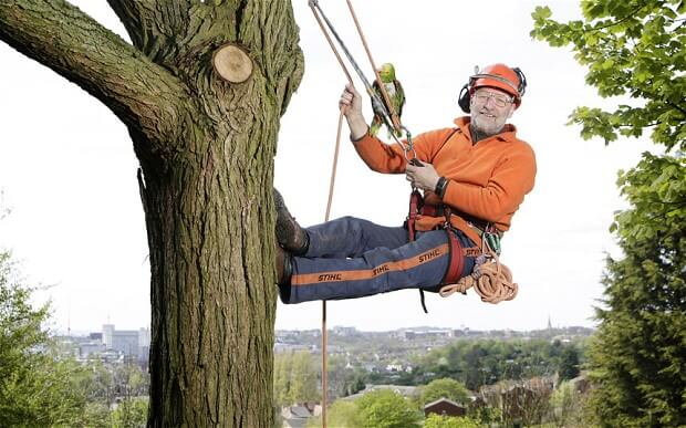 Knoxville Tree Surgery