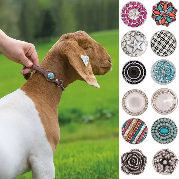 301415 Bling Goat Collar