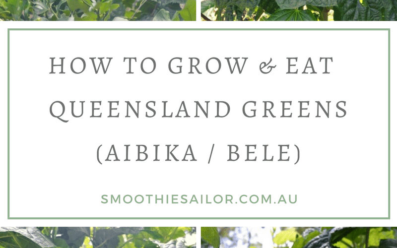 Aibika queensland greens how to grow and eat