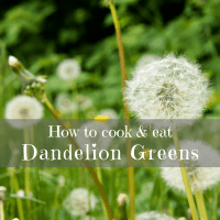 How to Cook and Eat Dandelion Greens - Edible Weeds