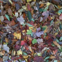 After Sandy, I spent a lot of time feeling sad, anxious, and frustrated about global warming; so it was nice to see that at least the storm left beautiful leaf piles.