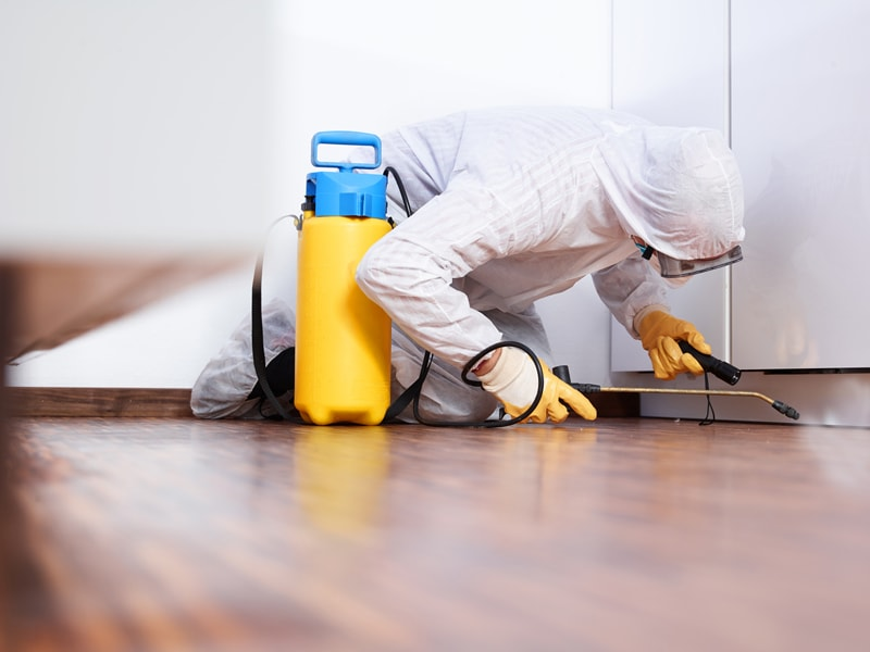 How To Control Pest Problem In Your House