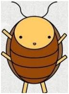 adult cockroach image