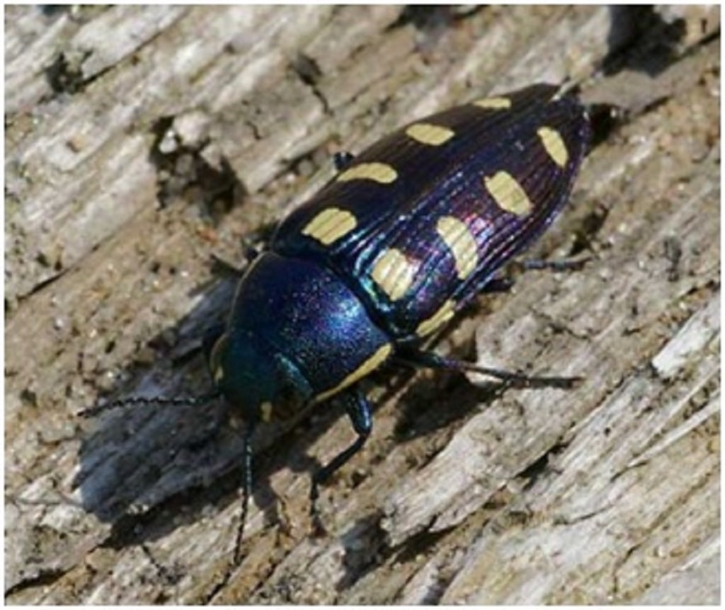 wood bugs featured image