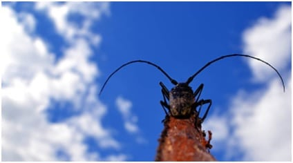 get rid of palmetto bugs featured image