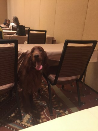 Irish setter coming out from under a table during a seminar.