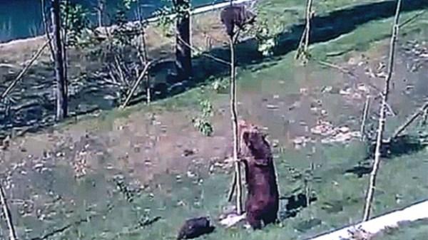 Смотреть видео онлайн - Мать зашла в ванну к голому сыну