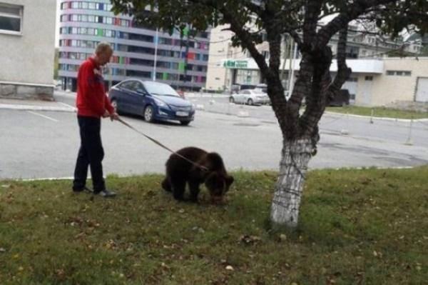 Смешные фото приколы из России   34 фото