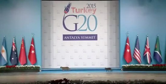 G20 cat
