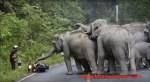 【驚愕映像】大量のゾウがある男性を襲撃!!そのとき男性がとった意外な行動とは?