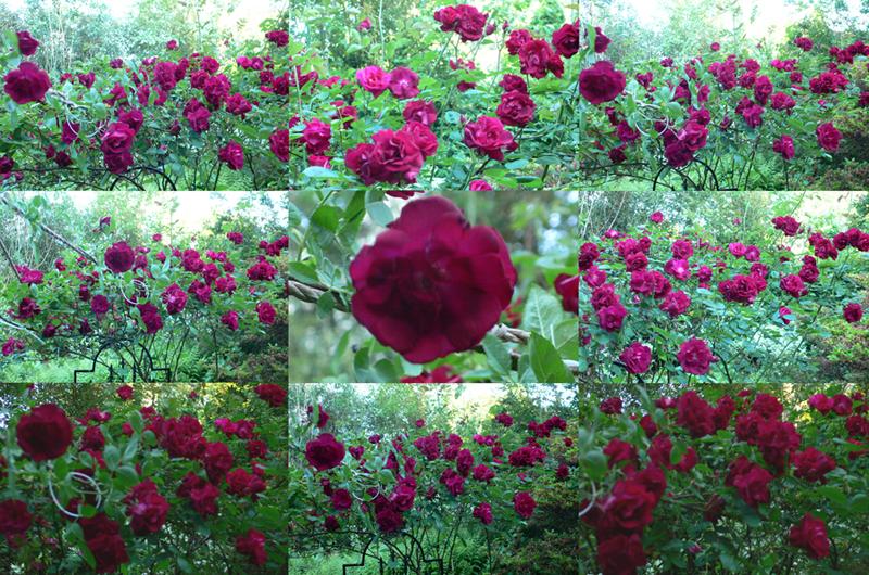 June Reds