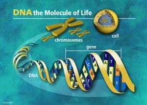 DNA Voice Scanning