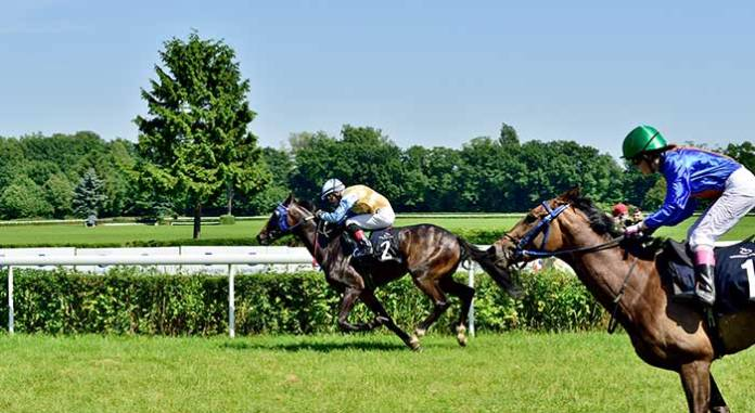 side view of horses racing