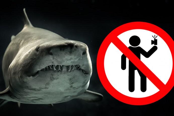 requin danger selfies selfie égoportrait mort by GEORGE DESIPRIS from Pexels