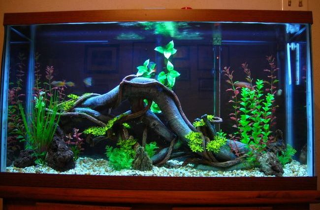 10 Most Amazing Aquariums That Will Make You Wish You Were A Fish