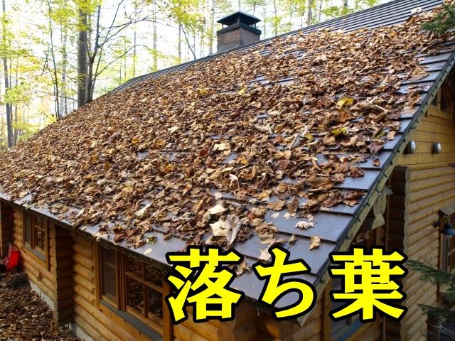 落ち葉の掃除。隣人トラブル発生!?そもそも誰の責任なの??