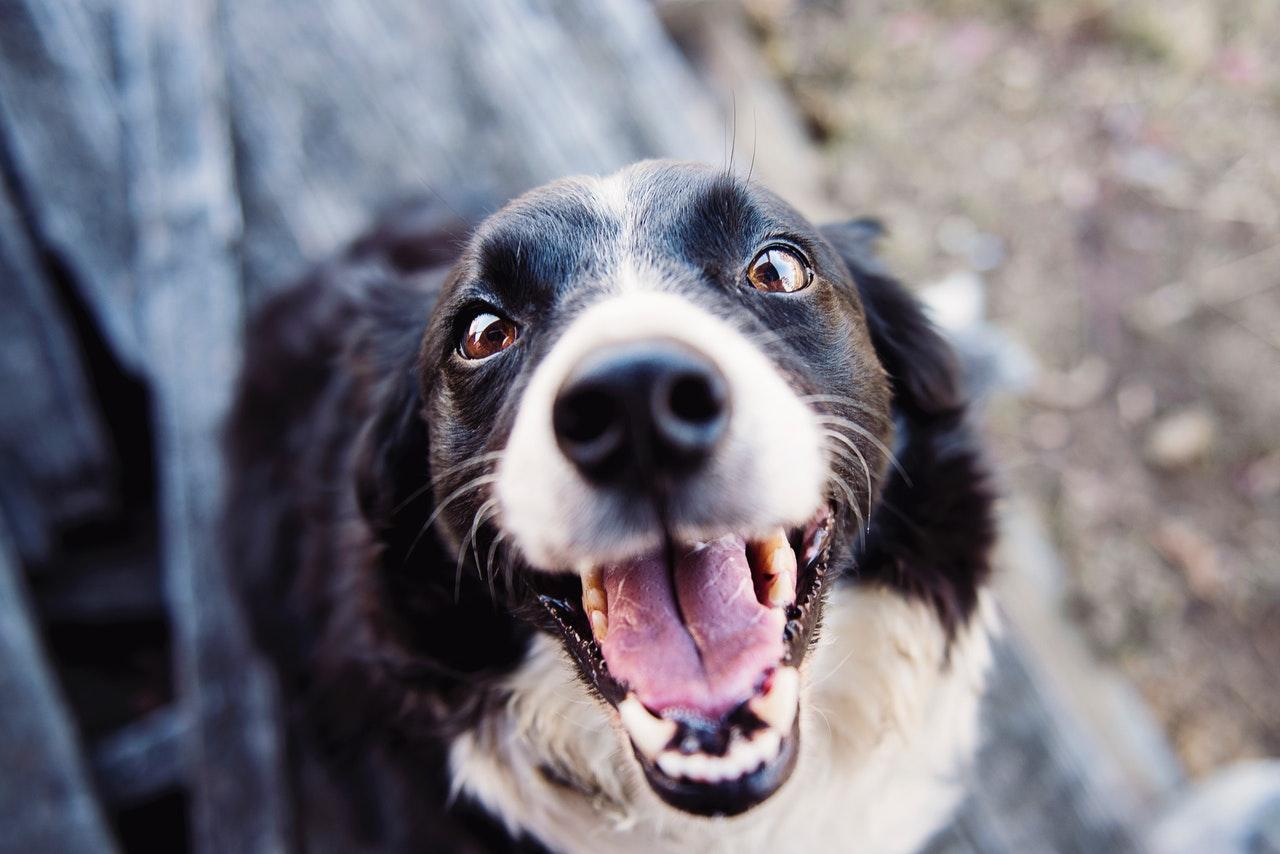 Собаки знают когда вы им лжете