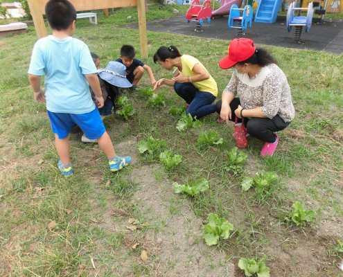 二年級仔細觀察自己的作物