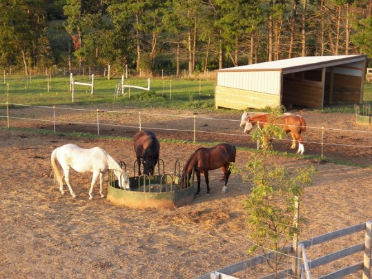 The gelding's paddock and shelters.