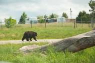 Bear Country USA-1