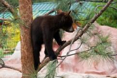 Bear Country USA-11