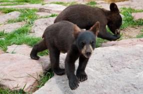 Bear Country USA-8