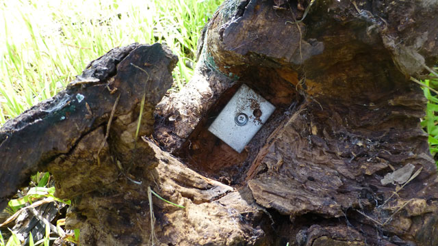 Metal baseplate fixed to the stump.