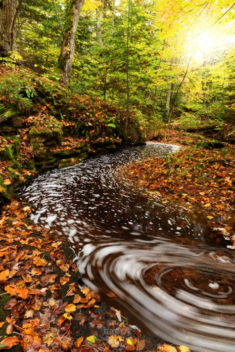 A slow-moving stream surrounded by fall color forms spiral swirls