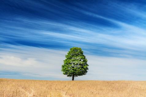 single-tree-blue-skies-05166006