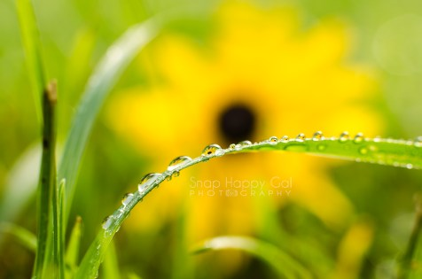 Photo: Yellow flowers captured inside a trail of raindrops on a blade of grass