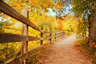 Photo: fall color and a fence line a hiking trail